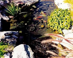 Ponds & Streams #004 by Allure Pools and Outdoor