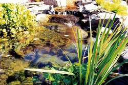 Ponds & Streams #005 by Allure Pools and Outdoor