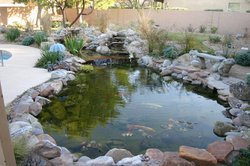 Ponds & Streams #006 by Allure Pools and Outdoor